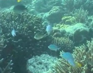 Начало на глобално измиране на подводната флора и фауна