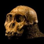 Открит е най-древният предшественик на човека