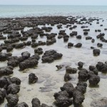 Палеобиолози изясняват метаболизма на древните организми
