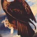 John James Audubons Golden Eagle 1833