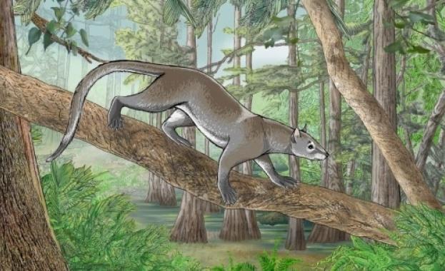 Откриха останките на древно млекопитаещо в Белгия – Dormaalocyon latouri